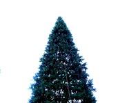20121118_イケア船橋_モミの木クリスマスツリー_1502_DSC02280