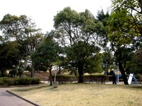20130320_船橋市若松3_若松公園_桜_1146_DSC05954