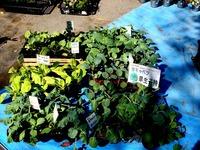 20121021_船橋市本町1_秋の緑と花のジャンボ市_1114_DSC07371
