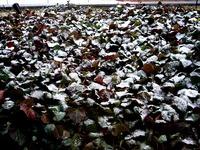 20130128_太平洋側_強い寒気_低気圧_積雪_大雪_1937_DSC00026