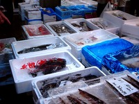 20120602_船橋市市場1_船橋中央卸売市場_ふなばし楽市_0925_DSC06672