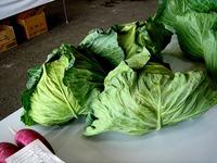 20121111_船橋市市場1_船橋中央卸売市場_農水産祭_1035_DSC01046