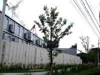 20130803_船橋市習志野台1_千葉徳州会病院_1213_DSC02913