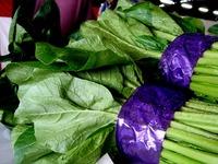 20121111_船橋市市場1_船橋中央卸売市場_農水産祭_1036_DSC01052