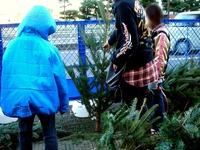 20121118_イケア船橋_モミの木クリスマスツリー_1504_DSC02301