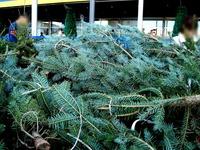 20121118_イケア船橋_モミの木クリスマスツリー_1504_DSC02294