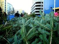 20121118_イケア船橋_モミの木クリスマスツリー_1504_DSC02302