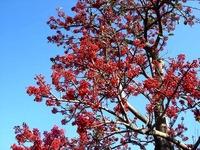 20121208_船橋市東船橋7_浜竹公園_ピラカンサス_0956_DSC05286