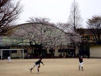 20130323_船橋市前貝塚町_塚田小学校_桜_1321_DSC07312