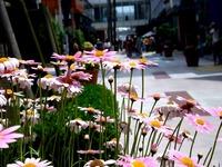 20130609_船橋市浜町2_ららぽーとTOKYO-BAY_花_1144_DSC31043