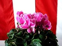 20121111_船橋市市場1_船橋中央卸売市場_農水産祭_1036_DSC01055