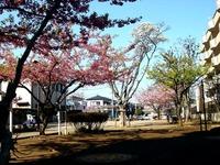 20130316_船橋市本町4_本町児童公園_桜_1435_DSC04414