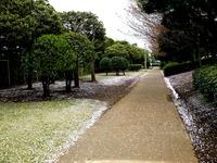 20130406_船橋市若松3_若松公園_桜_サクラ_1205_DSC09634