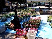 20121021_船橋市本町1_秋の緑と花のジャンボ市_1112_DSC07368