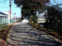 20131117_船橋をきれいにする日_一斉清掃_1101_DSC09598