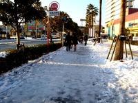 20130115_船橋市_関東地方_低気圧_成人の日_大雪_0739_DSC09815