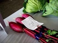 20121111_船橋市市場1_船橋中央卸売市場_農水産祭_1035_DSC01045