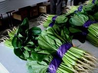 20121111_船橋市市場1_船橋中央卸売市場_農水産祭_1036_DSC01051