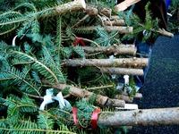 20121118_イケア船橋_モミの木クリスマスツリー_1504_DSC02295