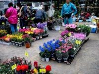 20130420_船橋市本町7_第75回緑と花のジャンボ市_0947_DSC02041