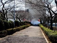 20120325_船橋市浜町2_三井ガーデンホテル_サクラ_桜_1147_DSC08368