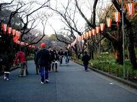20120314_東京都台東区上野公園5_桜_花見_1659_DSC08301