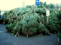 20121118_イケア船橋_モミの木クリスマスツリー_1503_DSC02283