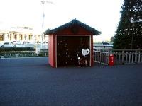 20121118_イケア船橋_モミの木クリスマスツリー_1502_DSC02274