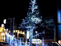 20121115_西船橋駅北口ロータリー_クリスマスツリー_1953_DSC01502T
