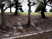 20130406_船橋市若松3_若松公園_桜_サクラ_1204_DSC09621