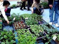 20120421_船橋市本町7_緑と花のジャンボ市_1007_DSC09443