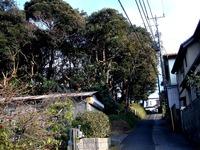 20120102_習志野市鷺沼3_八剱神社_八剣神社_初詣_1433_DSC08527