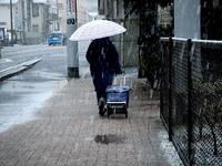 20130114_船橋市_関東地方_低気圧_成人の日_大雪_1142_DSC09754