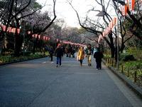 20120314_東京都台東区上野公園5_桜_花見_1659_DSC08302