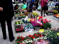 20130420_船橋市本町7_第75回緑と花のジャンボ市_0947_DSC02040