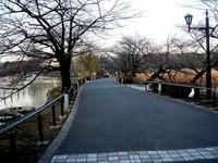 20120314_東京都台東区上野公園5_桜_花見_1650_DSC08264