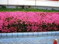 20120526_習志野市茜浜2_千葉県国際総合水泳場_1445_DSC06209