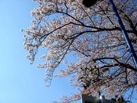 20120412_船橋市浜町2_ららぽーとTOKYO-BAY_桜_0751_DSC08494