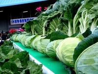20121111_船橋市市場1_船橋中央卸売市場_農水産祭_1000_DSC00967