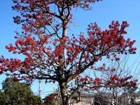 20121208_船橋市東船橋7_浜竹公園_ピラカンサス_0956_DSC05285