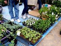 20120421_船橋市本町7_緑と花のジャンボ市_1007_DSC09444
