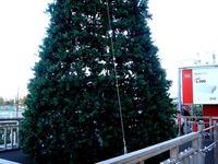 20121118_イケア船橋_モミの木クリスマスツリー_1503_DSC02281