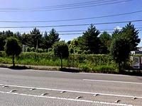 20130609_船橋市高瀬町_船橋卸団地_060
