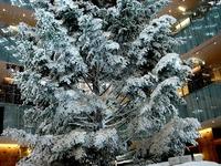 20131218_東京都千代田区_KITTE_クリスマスツリー_1357_DSC05041