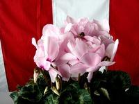 20121111_船橋市市場1_船橋中央卸売市場_農水産祭_1036_DSC01057
