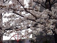 20130323_船橋市本町6_とんぼ大黒像_桜_1549_DSC07484