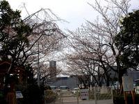 20130323_三井ガーデンホテルズ船橋ららぽーと_桜_0922_DSC06957