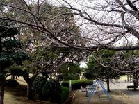 20130320_船橋市若松3_若松公園_桜_1150_DSC05991