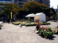 20121021_船橋市本町1_秋の緑と花のジャンボ市_1112_DSC07366