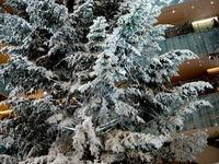 20131218_東京都千代田区_KITTE_クリスマスツリー_1357_DSC05040